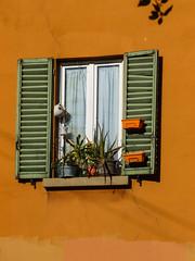 Colours of Bologna (lorenzog.) Tags: bologna colours coloursofbologna ilobsterit vividcolours contrast window plants emiliaromagna italy panasonic lumix