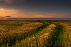 Summer field (ola_er) Tags: field summer crops sunset sun sky colours scotland landscape nikon d750 nikonflickraward