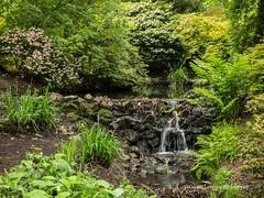 Clyne Gardens 2017 06 01 #6 (Gareth Lovering Photography 3,000,594 views.) Tags: clyne clyneinbloom botanical gardens flowers macro swansea olympus omdem10ii 30mm 30mmmacro garethloveringphotography