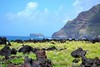 coastal view (ekelly80) Tags: azores portugal sãomiguel may2017 termasdaferraria pontadelgada rocks lava black lavarocks beach cliffs view green grass water ocean atlanticocean coast