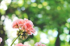 We have all the time in the world (No_Mosquito) Tags: canon powershot green pink bokeh nature spring sunlight foliage g7xmarkii yourbestoftoday naturemasterclass