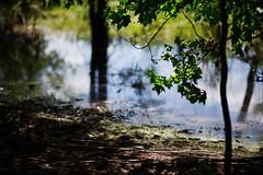 walk about Harris Lake 38 (furrycelt) Tags: harrislake newhillnc nikon85mmf14afd nikon85mmf14 northcarolina shearonharrisreservoir ianwilson jianwilson photographersoftumblr 85mm d600 nikon forest furrycelt lake lensblr natural nature trees water woods