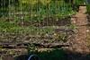 Monthly vegetable garden update - May 2017 by pakovska.com (pakovska) Tags: garden jardin potager jardinpotager jardinage moestuin kitchengarden ediblegarden organicgarden gardening permaculture groentetuin allotment volkstuin