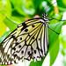 Blenheim Palace Butterfly House