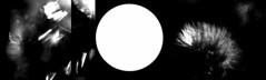 [ - flowers, light, and broken glass - ] (ǝlɐǝq ˙M ʍǝɥʇʇɐW) Tags: sun solar imagery glass brokenglass light scattering fd disk flower bw blackandwhite triptych camera damagedcamera injuredcamera optics refractive wavelength nm transmited reflective incident ray cullet luminosity spectrum shift broken black sky texas mourning 523