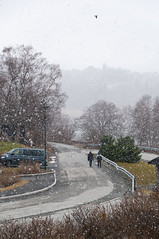 Vikhammer's Spring Blizzard (PuffinArt) Tags: norway noruega trøndelag malvik earlyspring ice frozen trees snow nikon d300 nikkor 18200 vr puffinart vandamalvig vikhammer wet blizzard