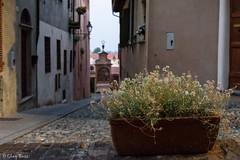 vaso di fiori di notte (Clay Bass) Tags: 12800 nikon saluzzo d750 flowers natural night street