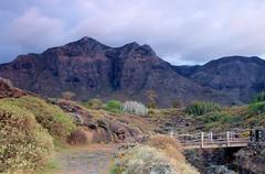 IMG_1964 (nelson_tamayo59) Tags: campo golf buena vista tenerife norte islas canarias