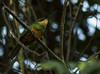 ARIRAMBA02 (Edvaldomarques) Tags: ave ariramba portoferreira brasil nikon brazil spiritofphotography musictomyeyes natureza nature bird freedomlife freedom