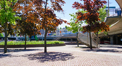 Trees Changing Colour (grey_goshawk) Tags: stockholm deciduous trees shadow
