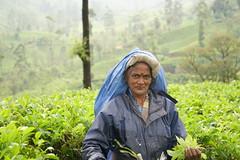 Sri Lanka, tea pickers (23) (walterkolkma) Tags: srilanka tea pickers teapickers centralhighlands nuwaraeliya strathdon teaestates women laborers tamils sonya6300