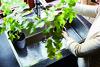Miinus_Vasteras_2016_1660 (puustellimiinus_se) Tags: puustelli puustellimiinus ekologiskt kök proffskock gastronomi köksinredning köksplanering köksrenovering miljö västerås