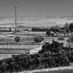 The Walla Walla Valley American Viticultural Area (Black & White) thumbnail