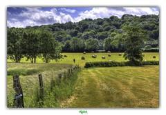 WE ARE ALL ALONE (régisa) Tags: longfossé boulonnais landscape paysage d204 thehumanvoice parc naturel régional dopale parcnatureldescapsetmaraisdopale
