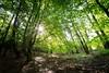 Urwaldsteig, am Peterskopf (N.Sample) Tags: urwaldsteig edersee nikon d7100 sigma 1020 randstrase panorama trees forest baum bäume wald wälder hdr ausblick aussicht