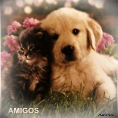 Amigos... (MariaTere-7) Tags: animales mascotas perro gato amigos caracas venezuela maríatere7