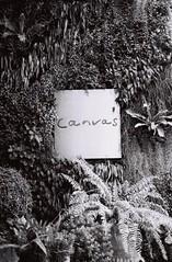 A Blank Canvas ? (35mm) (jcbkk1956) Tags: carlzeiss 45mmf28 bangkok thailand thonglo mono blackwhite film 35mm analog street sign plants foliage contax 167mt ilford pan100 manualfocus worldtrekker