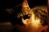 """""""What's happening there?"""" (Alfredo Liverani) Tags: happy caturday happycaturday archivalphotos italia italy italien italie emiliaromagna romagna faenza faventia faience animal kitten gatto gatta gatti gatte cat cats chats chat katze katzen gato gatos pet pets tabby furry kitty moggy moggies gattino animale ininterni animaledomestico aliceellen ellen canon40d canon 40d"""