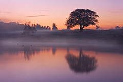 Tree Reflection at Dawn (Barry O Carroll Photography) Tags: tree lake river water mist misty reflection mirrorimage silhouette dawn morning maynooth kildare ireland landscape nature outdoor