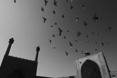 Iran - Esfahan (luca marella) Tags: iran esfahan birds pigeon sky mosque reportage religion islam lucamarellacom architecture culture blackwhite bw bn biancoenero street