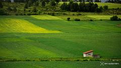 fertile lands / 200617200 (devadipmen) Tags: ağaçarboreal bitkiplant bitkiörtüsüflora buğdaywheat doğanature düzce kulübehut manzaralandscape tarlafield türkiye istanbul fertile lands