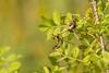 BirdID WP Bulgaria 2017 (_alcedo_) Tags: balchik birdidwpbulgaria2017 borisbelchev bulgaria insects macro nature animal animals biodiversity breeder bug bugs insect wildlife wwwalcedowildlifecom