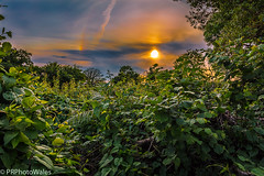 Over the Fence (PRPhoto-Wales) Tags: canon eos paul pembrokeshire rutherford uk wales bindweed blackthorn bushes hazel holly lightroom nohdr outdoors photograph prphotowales shrubbery sundown sunset trees