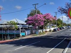 Brisbane, Paddington, pink trumpet trees IMG_20170704_110820 (ianw1951) Tags: brisbane queensland australia paddington trees flora floweringtrees pink