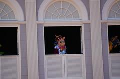 "Walt Disney World: Miss Piggy • <a style=""font-size:0.8em;"" href=""http://www.flickr.com/photos/28558260@N04/33907957024/"" target=""_blank"">View on Flickr</a>"