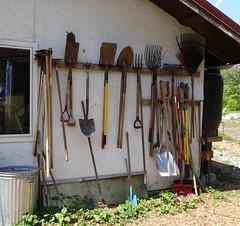 Farm Tools (Heath & the B.L.T. boys) Tags: tools farm organize galvanized bucket