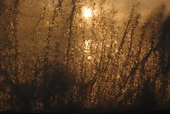 sunsplash (#christopher#) Tags: breakingwave sun backlit wave water sea visualart