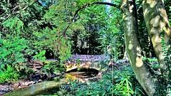 Hanau - Schlossgarten - Weiherbrücke (holgerHG) Tags: hanau deutschland hdr hessen schlossgarten weiherbrücke 2016