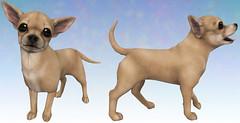 Chihuahua WIP ([JIAN]) Tags: secondlife mesh pet dog puppy canine gacha thearcade wip chihuahua