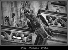 Gargoyles - 5 (fotomänni) Tags: prag praha prague veitsdom gargoyles wasserspeier steinfiguren skulpturen skulptur sculpture kunst schwarzweis blackwhite noirblanc gargouille manfredweis