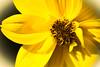 Blume-2 für Ausdruck (guentherpircher) Tags: bludenz vorarlberg österreich at