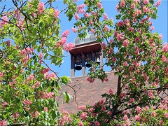 Ehingen (Donau) - Glockenturm (bell tower) (Jorbasa) Tags: belltower glockenturm kirche church jorbasa hessen wetterau germany deutschland geotag ehingen donau ehingendonau badenwürttemberg pflanze blüte blossom baum tree kastanienbaum kastanienblüten chestnut