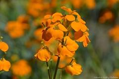 (Sandra Király Pictures) Tags: flowers flower spring nature outdoor botanicalgarden ogródbotaniczny warsaw warszawa poland