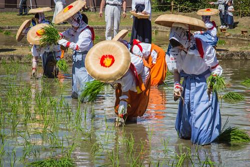 Traditional Rice Planting Matsuri at Taga-taisha, Shiga-ken.