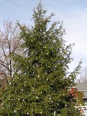 05 Decorated Tree (megatti) Tags: christmas christmastree lahaska pa peddlersvillage pennsylvania tree