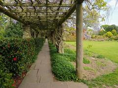 P5102517 (simonrwilkinson) Tags: nymans nationaltrust haywardsheath westsussex handcross garden wisteria pergola