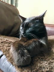 Mr big softy paws (mootzie) Tags: whiskers pawsbigfluffyfurrycatpetmarleyblack