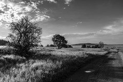 Morning - a path ahead (Petr Horak) Tags: vegetation countryside x100f path bohemia tree spring nature normallens fuji sky meadow rural czechia landscape clouds maláhraštice středočeskýkraj cze