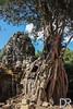 Ta Phrom temple (_damienroux_) Tags: taphrom tahpromtemple angkorwat angkor oldtree siemreap southeastasia worldtrip worldheritage unesco travelblogger travelpics travelphotography travel