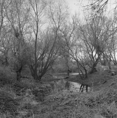 Modern Day Jungle (Other dreams) Tags: oxbow lake willow trees tight pond cloudy overcast bw film analog 120 6x6 rolleiflex35e xenotar 75mm nofilter pomerania poland michale dragacz fp4 paranols brush twigs branches sticks wetland