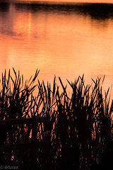 Lackford Lakes - a series of 7 (sharongellyroo) Tags: lackfordlakes outingswithclare gpc suffolk summer sunset