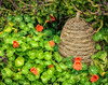 Beehive, Luthy Garden (David DeCamp) Tags: garden flowers rustic beehive nikond50