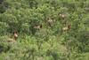 New Mexico Elk Hunt 25