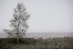 Park Point, Duluth (Sharon Mollerus) Tags: duluth minnesota unitedstates us