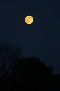 Rising Orange Moon