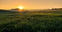 Tuscany Beauty (PhiiiiiiiL) Tags: tuscany toskana italy italien sunrise sonnenaufgang nikon d810 tamron 1530mm landscape landschaft toscana toscany panorama feld himmel
